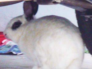 coelhos adotados