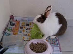 coelha adotada