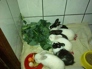 Muitos coelhinhos adotados
