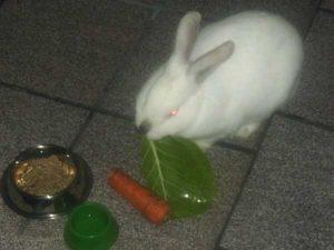 coelho resgatado
