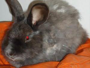 Fluffy Adotado