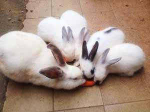 Coelhinhos abandonados aguardam adoção em sítio!