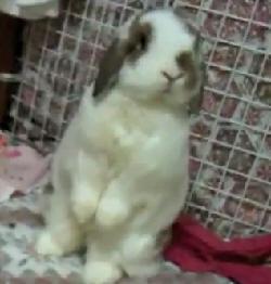 coelho salva casal de vazamento de gás