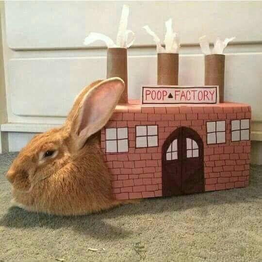 coelho fábrica de cocô