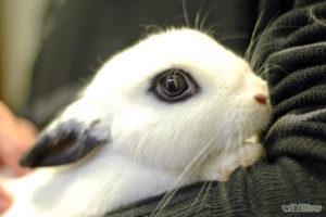 coelhos de presente