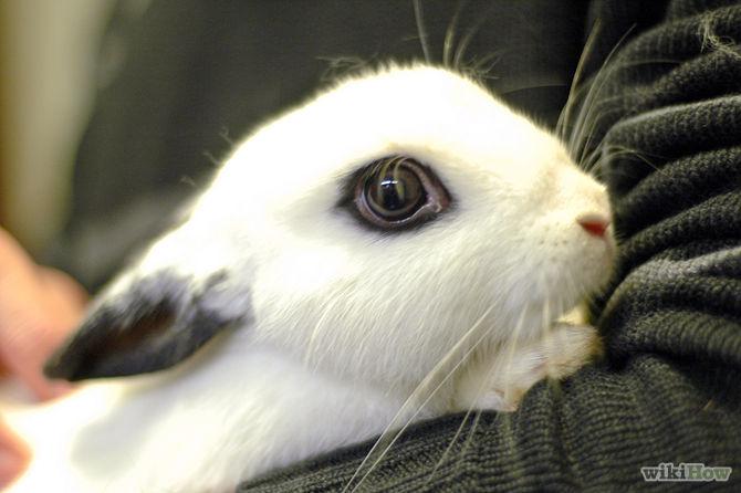 15 Razões para escolher um coelho de presente chocolate (em vez de um coelho de verdade) para a Páscoa!