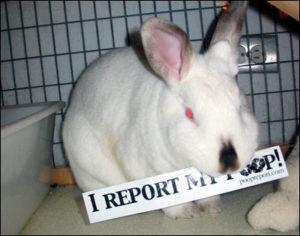 ensinar um coelho a usar a caixinha