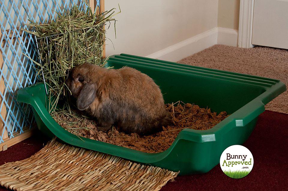 como ensinar um coelho a usar o banheiro