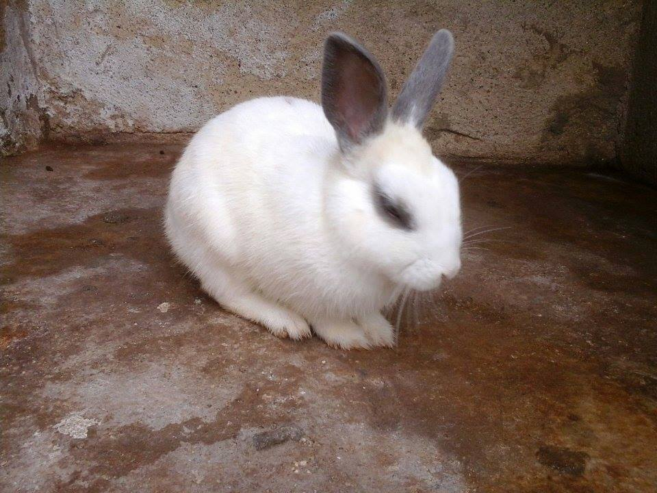 coelho adotado santo andré 03