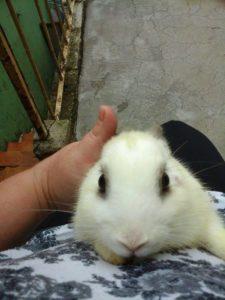 coelho adotado santo andré