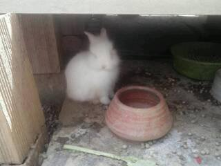 coelho adotado sp