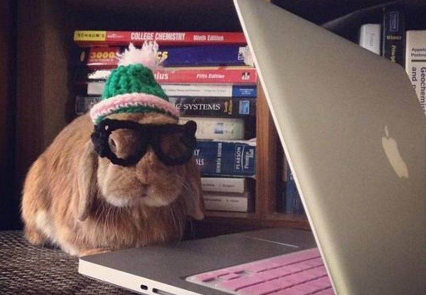 Manual do Coelho: saiba como cuidar de um coelho