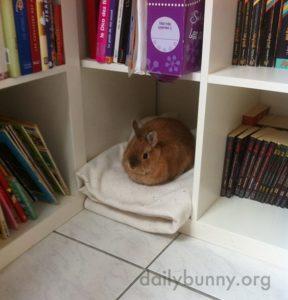 como preparar a casa para receber um coelho