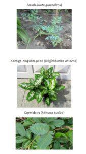 plantas tóxicas para coelho