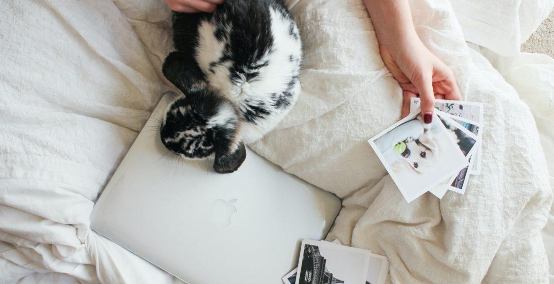 Como cuidar de coelhos: perigos dentro e fora de casa