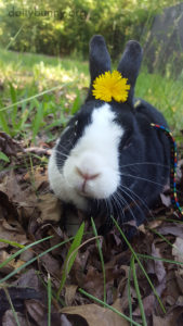 Questionário para adoção de coelhos