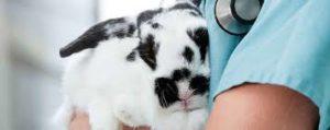 Clínicas veterinárias para coelhos