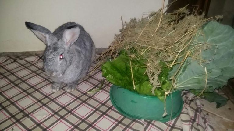 Vegetais essenciais para a nutrição do coelho
