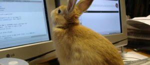 coelho email