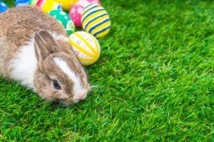 alimentação de coelhos