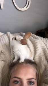 adotar coelhos