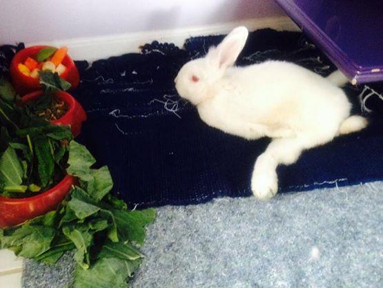Bluebell: um coelhinho pra lá de especial