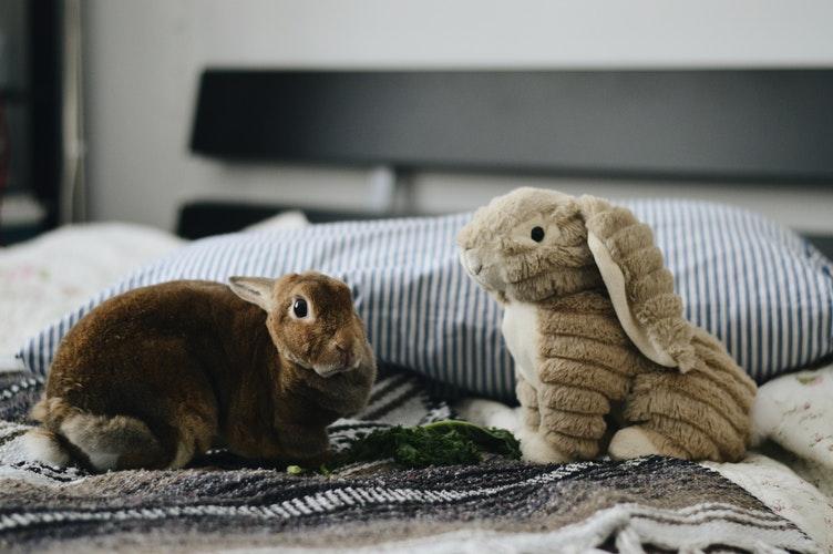 Melhor com dois: vantagens do coelho ter um companheiro