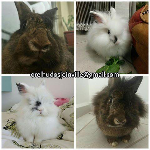 Adotados - Adoção conjunta Joinville/SC