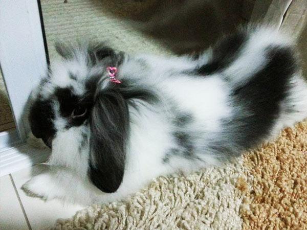 Fuzzy Lop Adotada