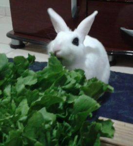 coelha comendo