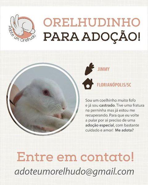 Adotado - Adoção Responsável Florianópolis/SC