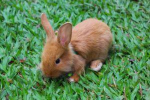 mitos sobre coelhos filhotes