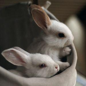 Como ajudar coelhos abandonados