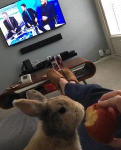 coelho comendo maçã