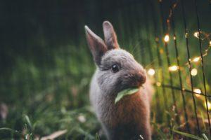 morte súbita em coelhos