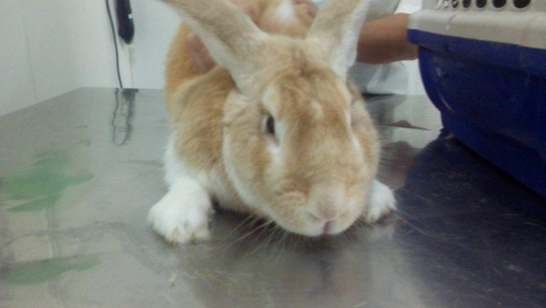 Resgate de coelhos de abatedouro e criadouro ilegal