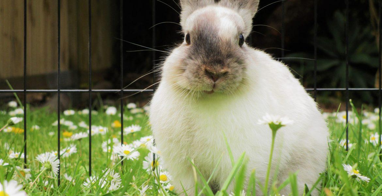 Como limpar o ambiente onde o coelho vive
