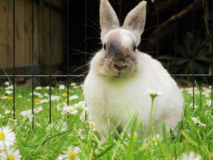 limpar o ambiente onde o coelho vive
