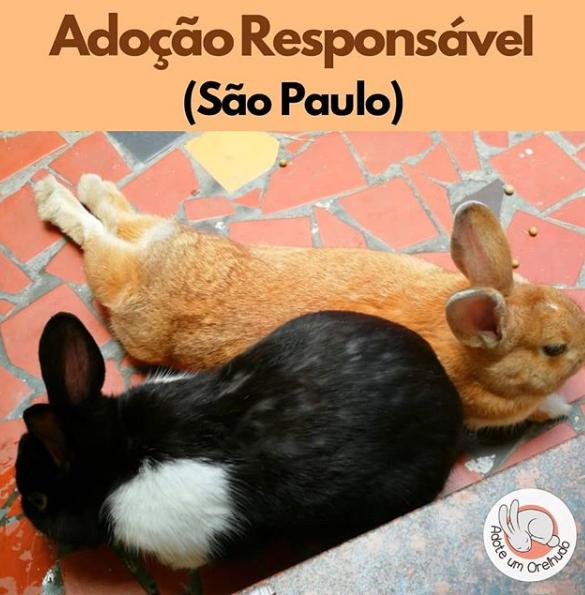 ADOÇÃO RESPONSÁVEL - SÃO PAULO (SOROCABA)