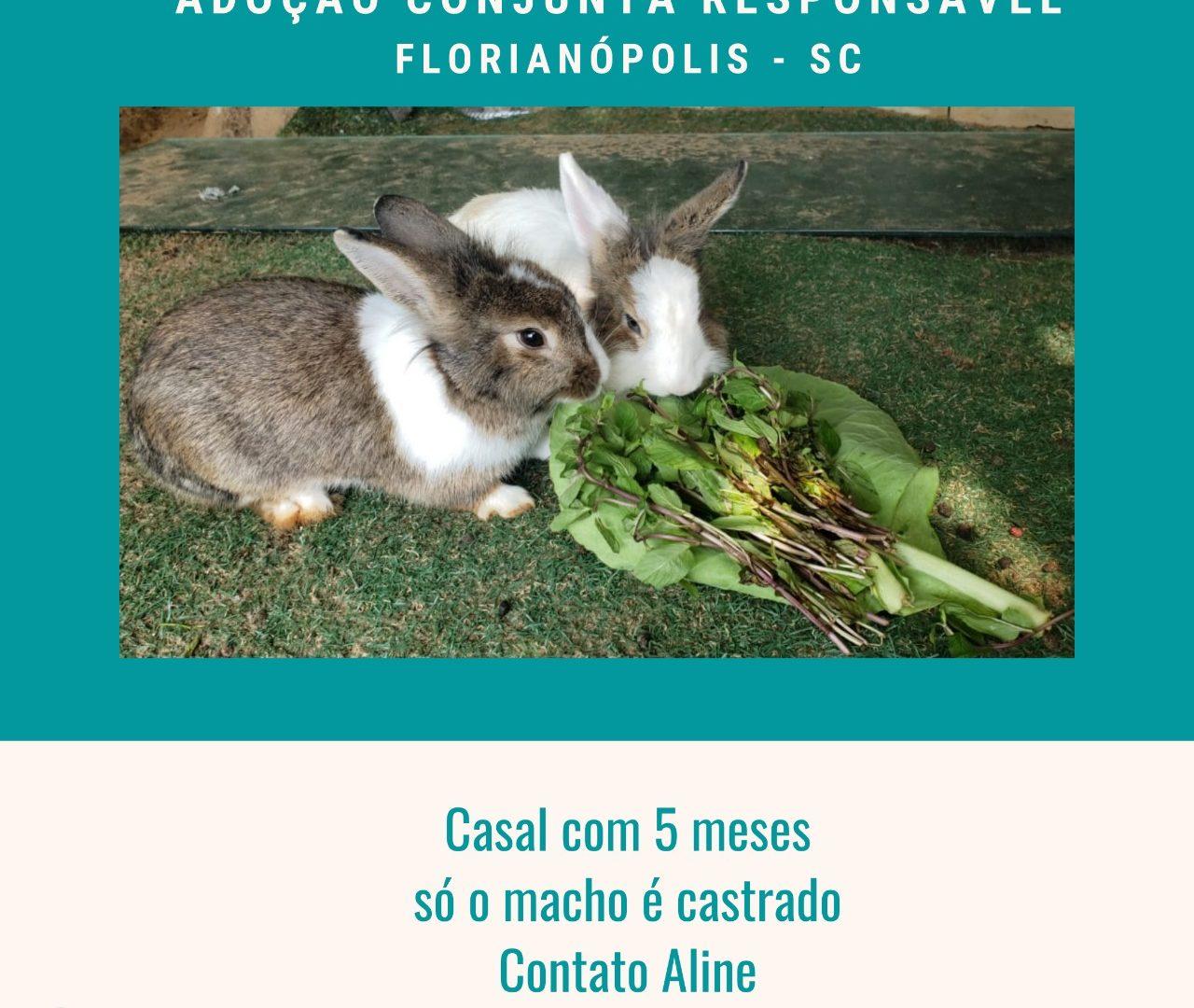 ADOÇÃO  CONJUNTA - FLORIANÓPOLIS  SC
