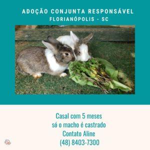 Coelhos para adoção em Florianópolis