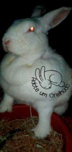 ajude coelhos
