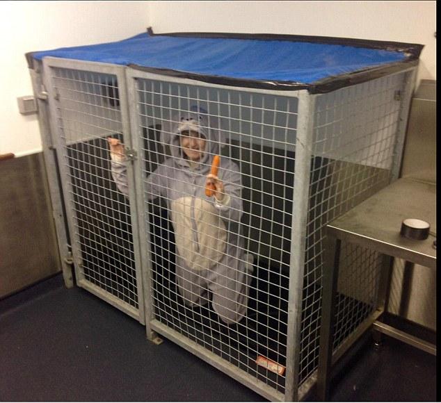Enfermeira veterinária vai ficar em uma coelheira humana durante 48 horas
