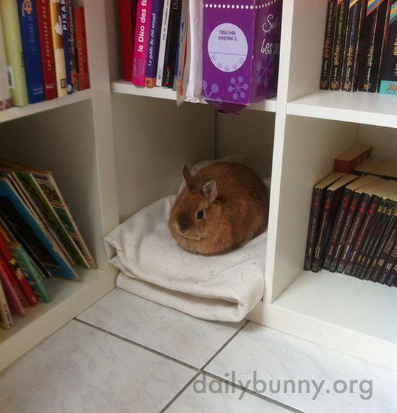 Como devo preparar a casa para receber meu coelho?