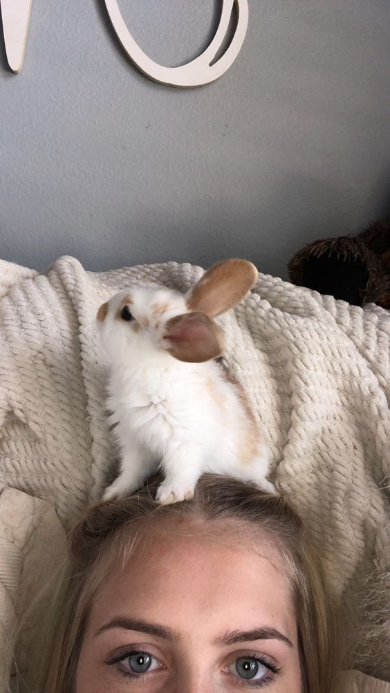 O que eu preciso saber antes de adotar coelhos