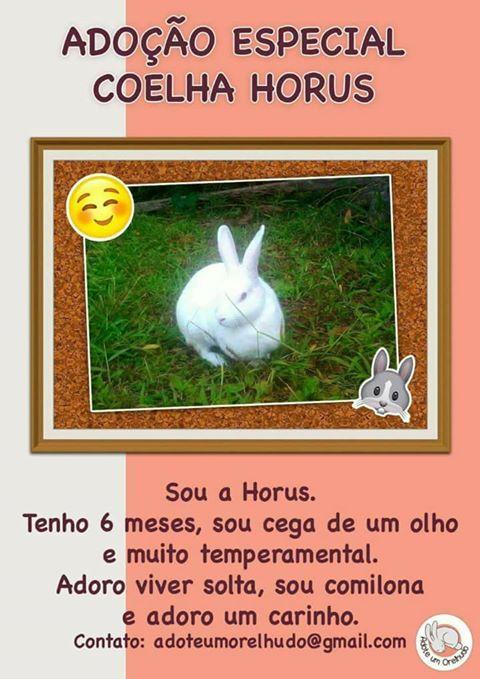 Adotada - Adoção Responsável e Especial Florianópolis/SC